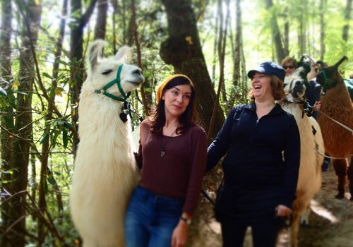 A group of people hiking with Llamas